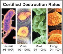 1A-Bacteria-mold-virus-fungi2